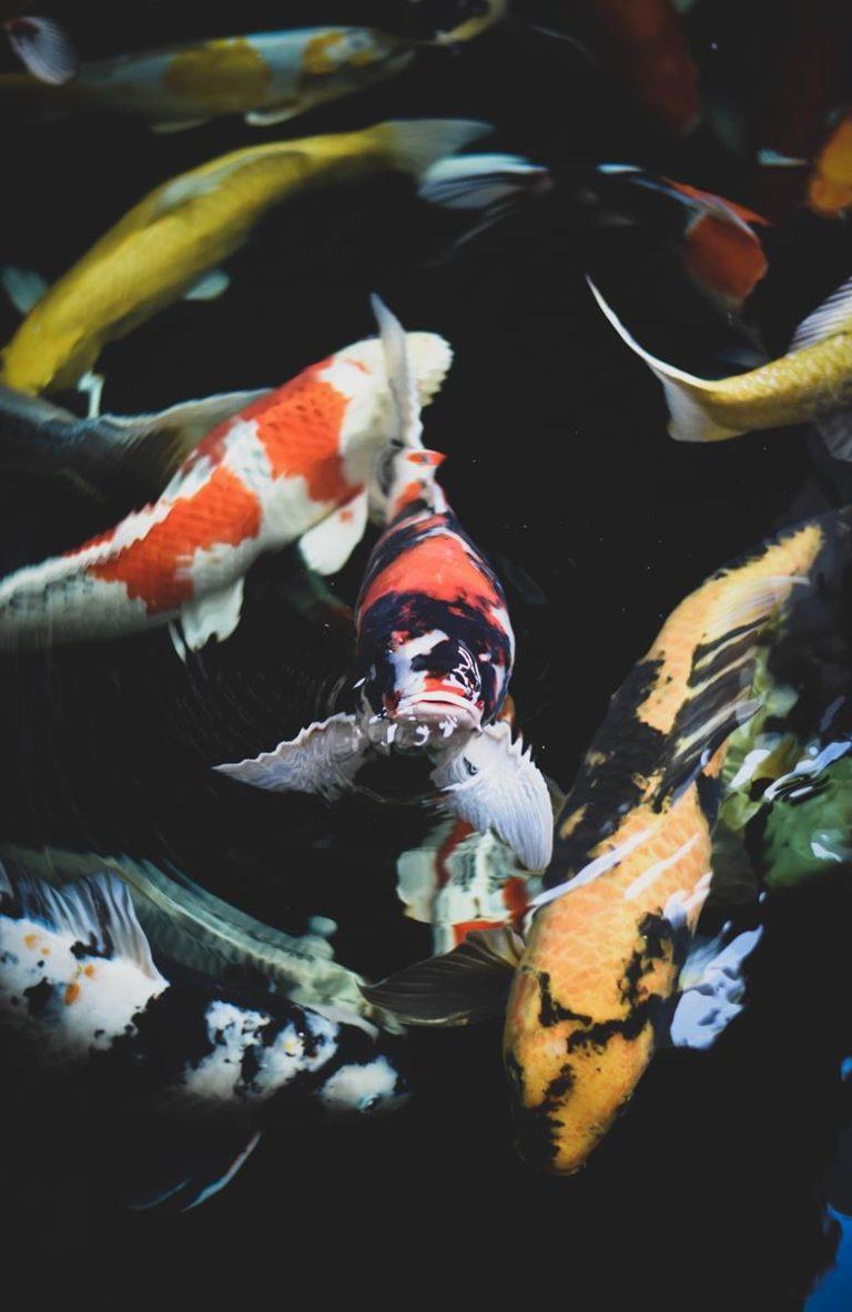 Pierwsze akwarium - to warto wiedzieć