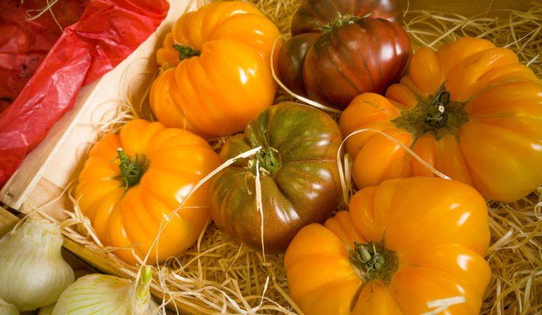 Bezpieczne przechowywanie pomidorów