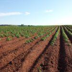 Zagrożenia roślin uprawnych – najważniejsze informacje