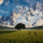 Świetna ochrona plonów – jaką wybrać?